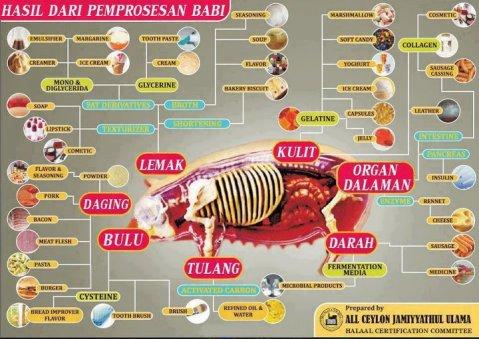 produk-produk dari babi